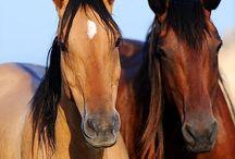 Horses / Pets / Animals / Horses / by Lois Garner