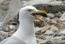 Favorite Coastal Photos
