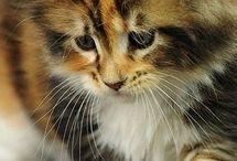 Katt  - Brannete
