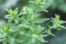 My Love of Herbs