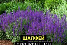 Травы для жизни