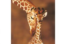 Animals <3 / by Becki Mosher