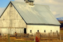 barn's / by Kathy Young