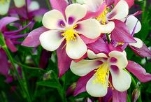 Pretty flowers / Gorgeous Flowers I like