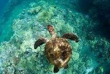 schildpadden*