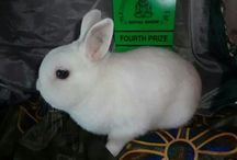 Prize Winning Bunnies / Our prize winners at That Bunny Farm! Kwazulu Natal,  South Africa