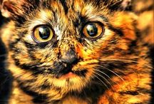 Spesial colored cats