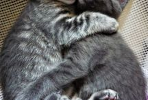 cicák és kutyák