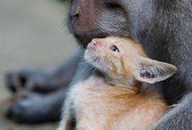 be my friend / unusual animal friends