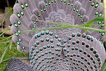 Stunning Peacocks