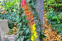 Autumn/Fall in the Classroom / Autumn and Fall Themed Resources for a middle grades classroom