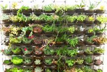 Vertical Gardening - Updated Gardening Ideas / Using a variety of local succulents, indigenous water wise plants. grasses and organic materials, the new concept of vertical gardening is suitable for all gardens, whether its a tiny townhouse wall or a rambling English garden....It looks AMAZING and is relatively easily designed, made and planted.