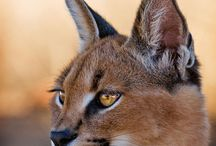 Animals you can see at AfriCat