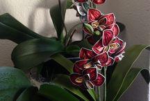 nespresso flores rama