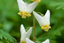 Flowers / by Anita Barber