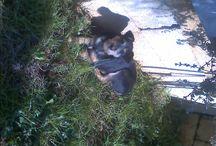 Lucky e Charlie / I miei cani