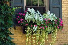 цветы украшают окна