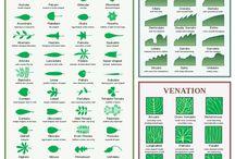 TAFE Plants / Plants I need to memorise for Plant Identification in Hort Cert II.