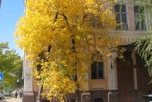 Autumn in my town / by Olga Beloysova