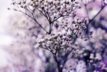 All About Lilac & Lavender / by Dina T.