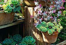 Plantas! / gardening