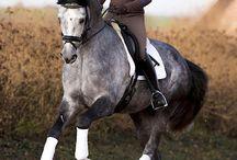 Horse Riding / Reiten / Ridning
