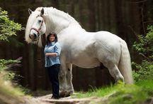 horses we love❤♥♥
