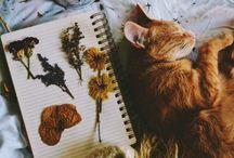 tumblr cat
