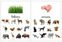 Carte nomenclature