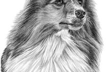 Shetland sheepdog drawings