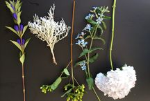 Our S&J Studio / These are SweetPea and Jasmine creations