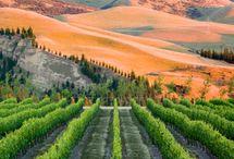 Canterbury & Waipara - New Zealand Wine Regions / For more New Zealand wine inspiration visit sipnzwine.com