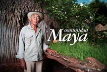 Comunidad Maya / by route109mx