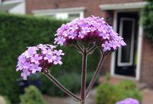 Groei en bloei / Eigen gemaakte foto's van planten