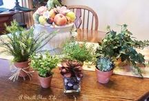 DIY Topiary Tutotials