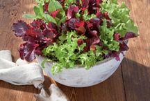 Salad bowl planter