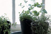 Gardening herbs, composting