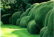 Garden Hedges / Beautiful and creative garden hedges meant to inspire.
