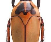 scarabaeidae cetoninae