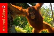 Rainforest Videos