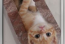 Kitties! / by Linda Stoker Proett