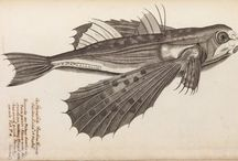 Vintage Sci-entific / Scientific Illustration, Book Covers, and Vintage Posters