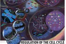 Citologia / Biologia celular e molecular