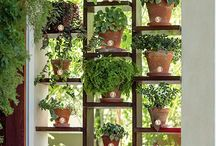 Inspirational plant ideas