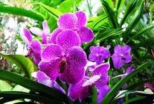 fiori <3