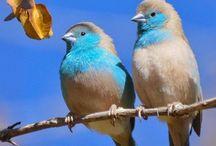 Nice Bird (Bachchu Makhal)