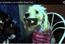 animalitos / tablero donde publico sobre mis mascotas