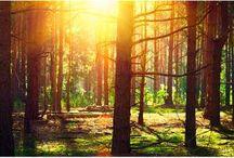 Herbstmotive / Kürbisse, Wald, Laub, Pilze, verregnete Stimmung - Motivdrucke und Textilbanner mit herbstlichen Motiven