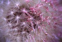 Pretty, pretty, pink and glittery