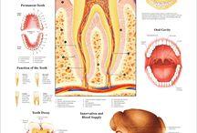 Dentistry / fkg